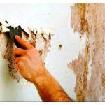 Чем обработать стены от плесени: только работающие методы