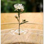 Вазы — насадки для цветов в виде кругов на воде