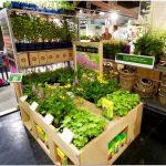 Дизайн магазинов товаров для сада и огорода — новая концепция от de haan group