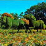 Выставка mosaiculture в ботаническом саду атланты