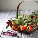 Осенняя пора, очей очарование ? уделите необходимое внимание вашему саду в сентябре