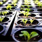 Влияние качества света на рост рассады