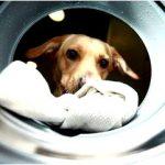 Англичане создали стиральную машину для собак