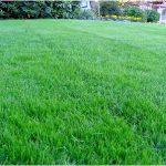 Как выбрать наиболее подходящую смесь газонных трав?