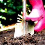 Выбор участка, подготовка почвы для посадки садовых растений