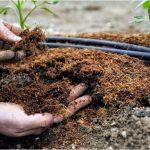 Минеральные удобрения для сада. Как выбрать лучшее?