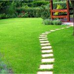 Как правильно выбрать газонную траву для использования на приусадебном участке